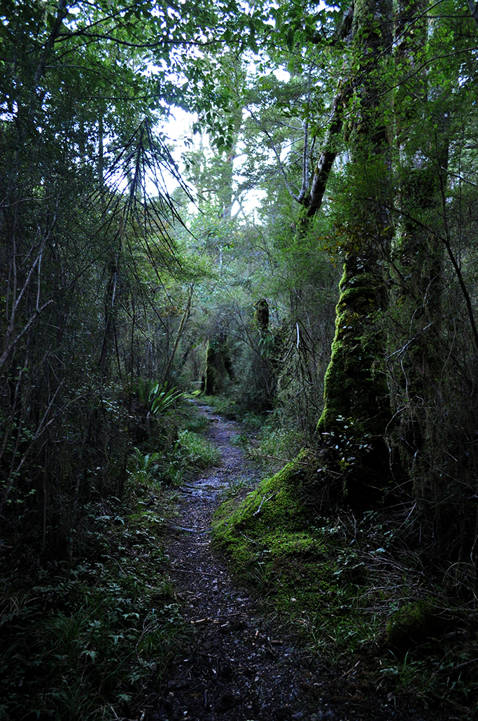 A forest path along Lake Hauroko
