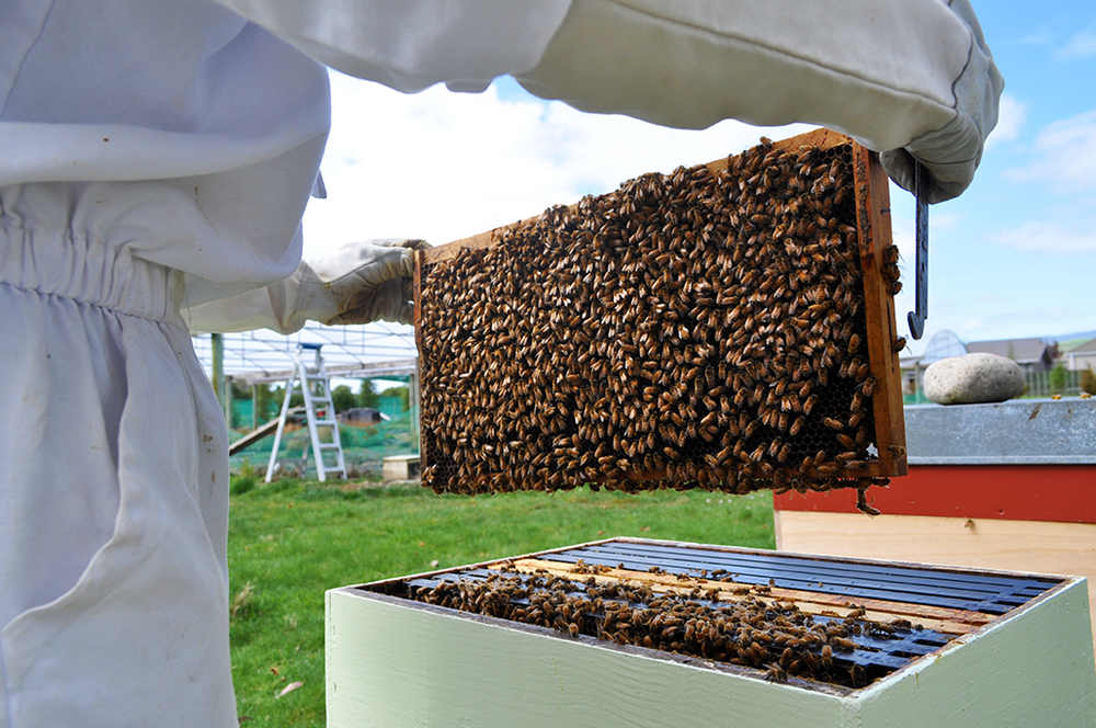 Diana gave us an inside look at the nursery's bee hives