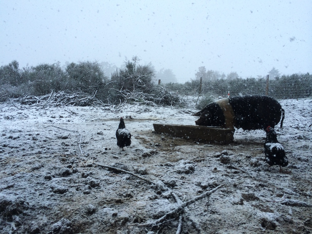 We woke one morning to snow...the animals were still hungry