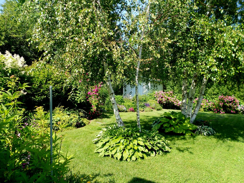 Lawn Care Maintenance Lorraine Landscaping Kentville