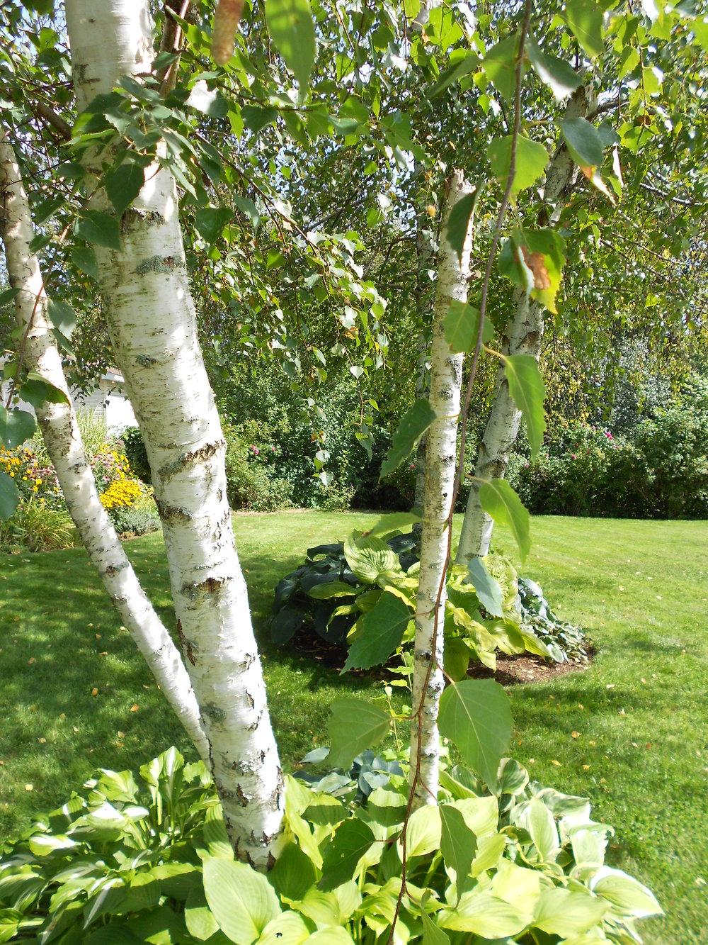 Sept 5 2016 - garden 050.JPG