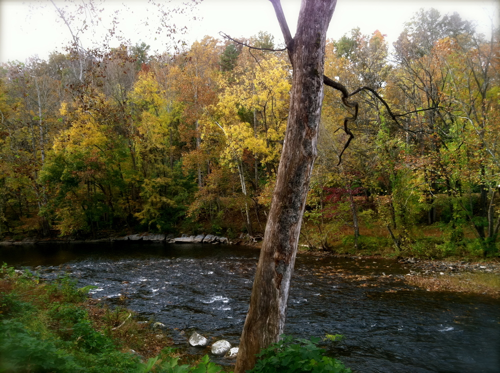Autumn at the Wellspring Retreat (picture taken from across the Little River)