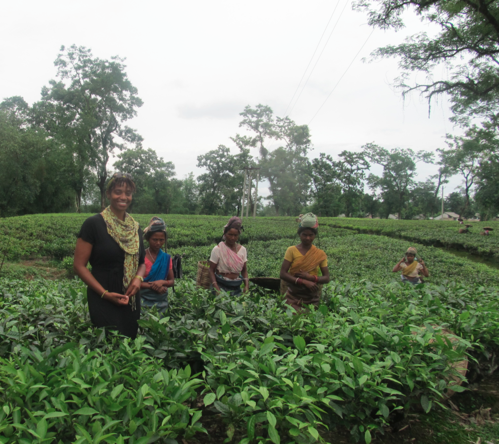 Dirok Tea Plantation, Assam, India - May 2013