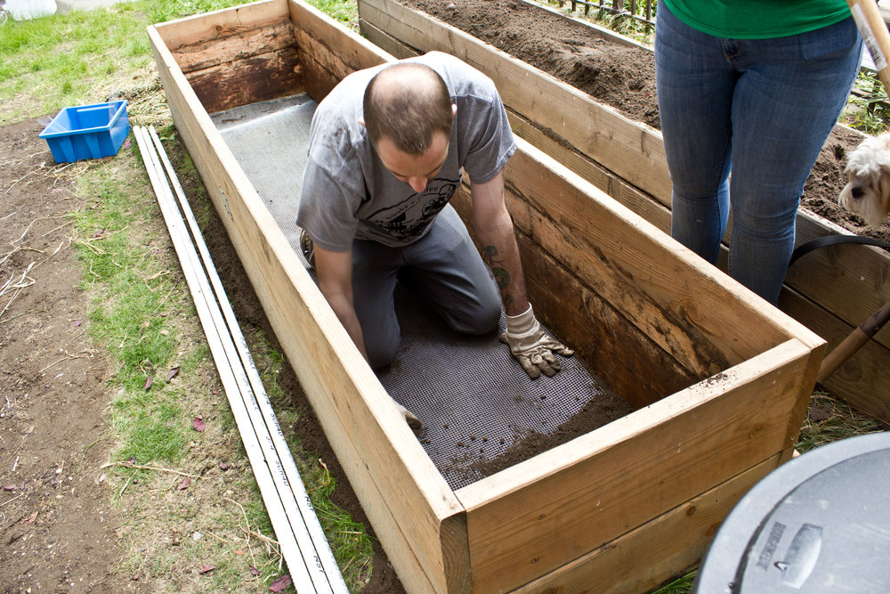 First, lay a hardwire cloth on the bottom of the raised bed so rodents can't come from underground to damage the bed and plants.
