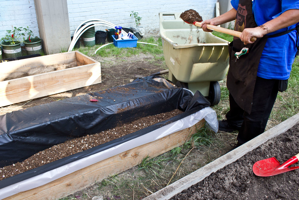 Fill the bed with a mixture of compost, vermiculture, and peat moss mix.