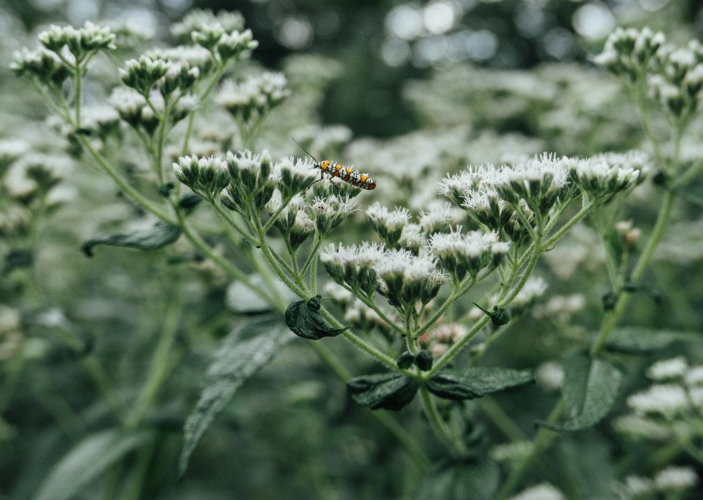 Beautiful bugs buzzing about.