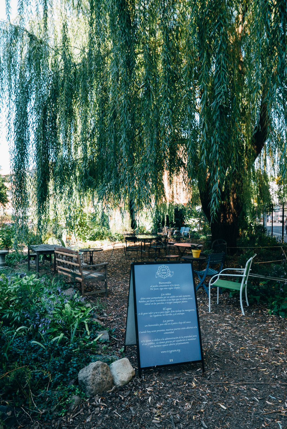 Weeping Willow tree with nice shady seating underneath.