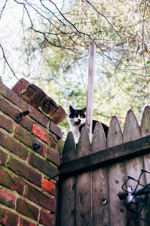 Neighborhood visitors