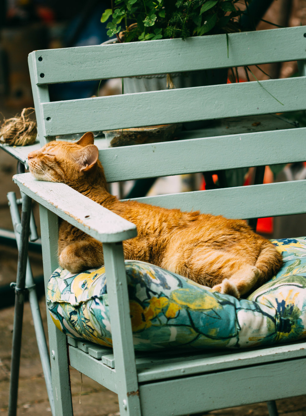 A cat's life is the best life