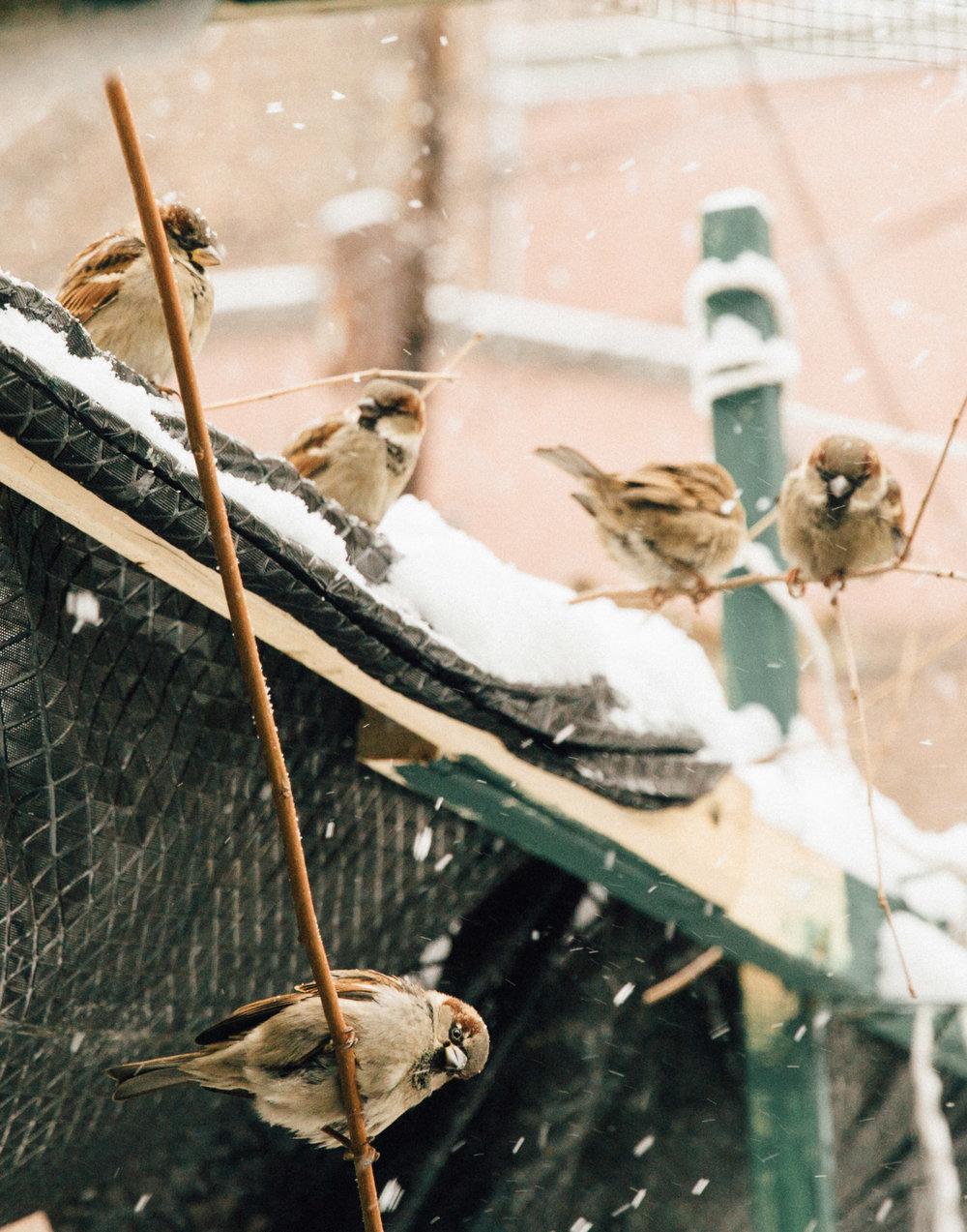 Winter Bird Sanctuary
