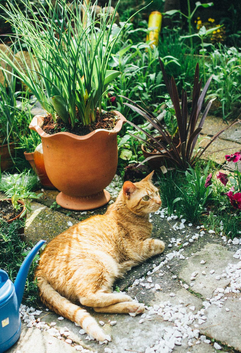 Urban Jungle Cat