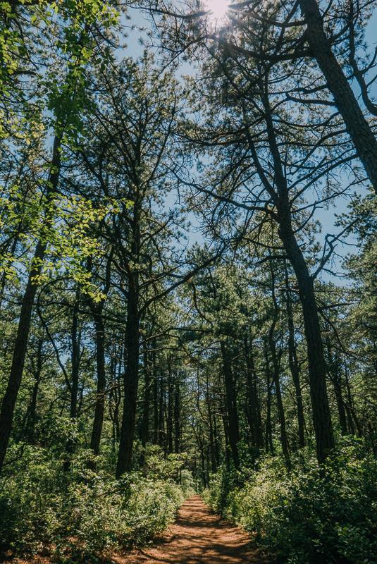 Dwarf Pine Trail