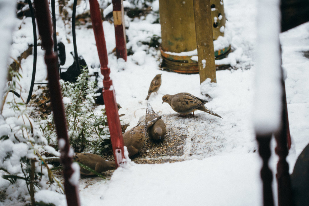 Our Third Winter - February 2018 marks a full three years re-wilding the Eco-Urban garden. Take a look at this little winter wonderland...