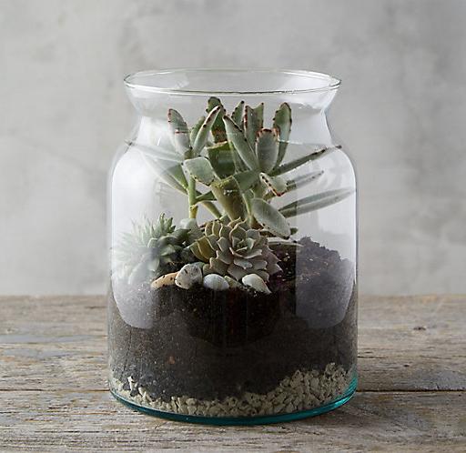 Open terrarium, $24,buy it  here .