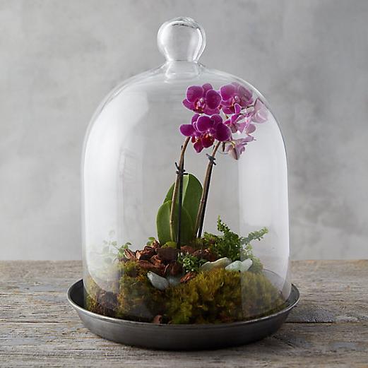Domed Cloche terrarium, $24-$58, buy it  here .
