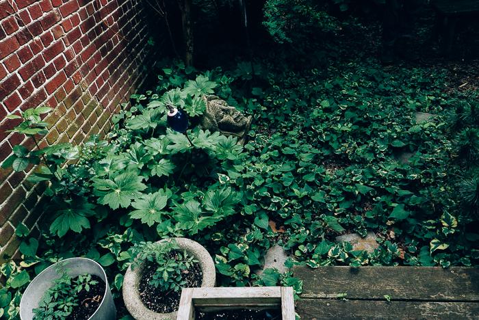 jwpm_gardenramble-4.jpg