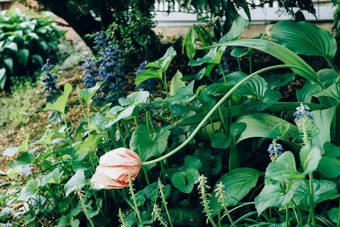 jwpm_gardenramble-2.jpg