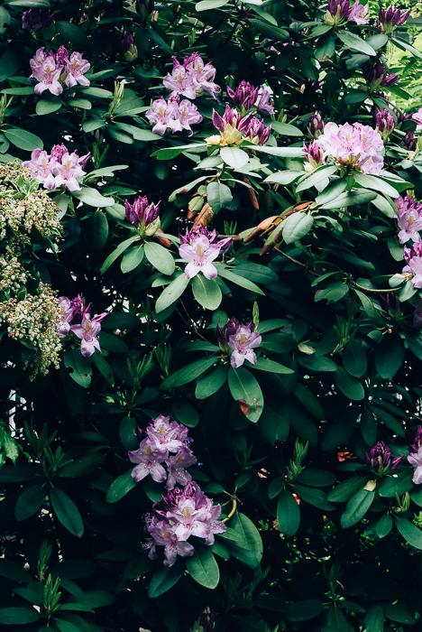 jwpm_gardenramble-2-2.jpg