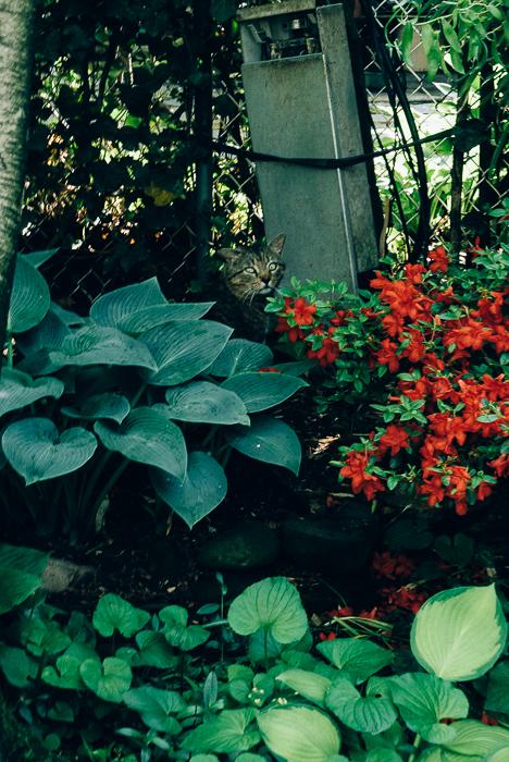 jwpm_gardenramble-5-2.jpg