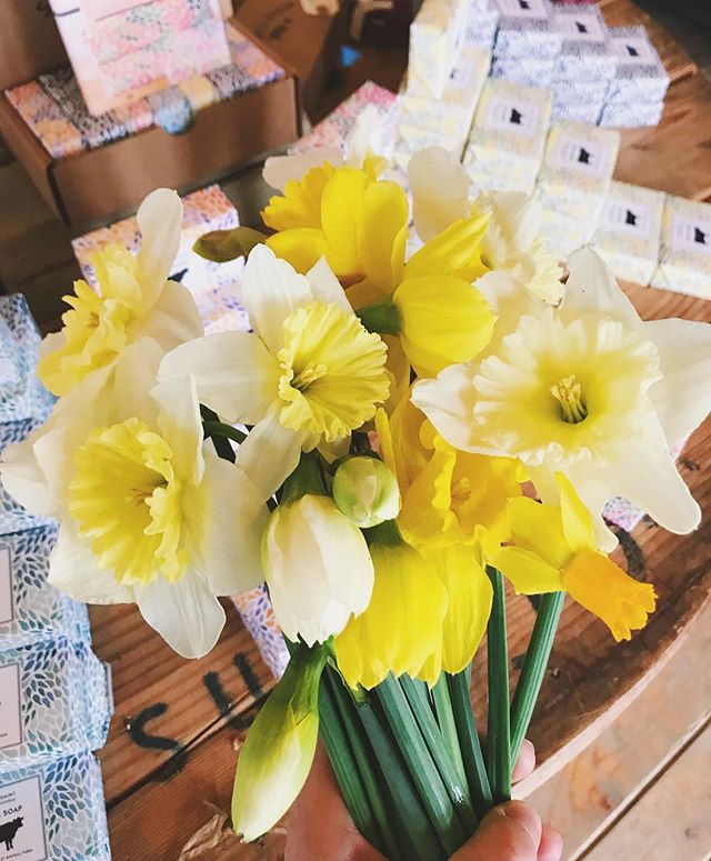 Despite the rain and cold we have some beautiful narcissus in the shop today from @shovingleopardfarm. Come and grab a bunch to remind yourself that it is, in fact, spring!