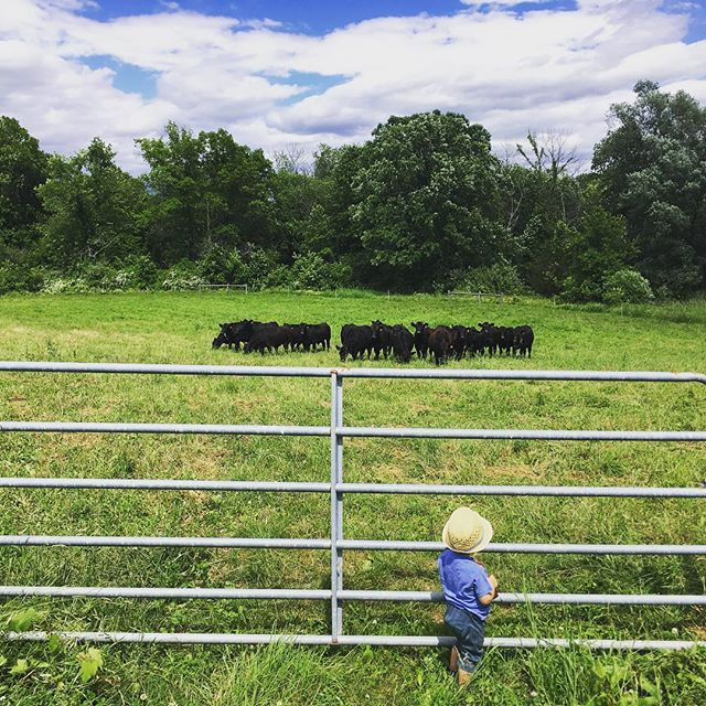 Happy Father's Day weekend!  The beef in the store is more approachable than the steers in the field.  We are nicely stocked both places, though, so we hope to see you here.