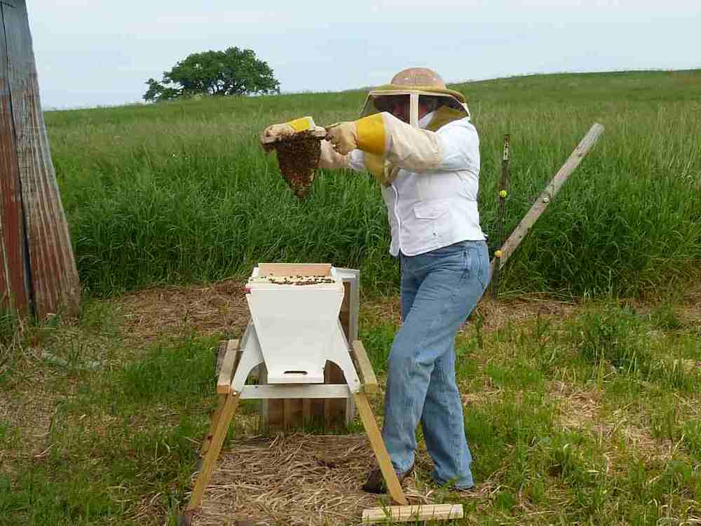 Angela checks the bees. Happy bees!