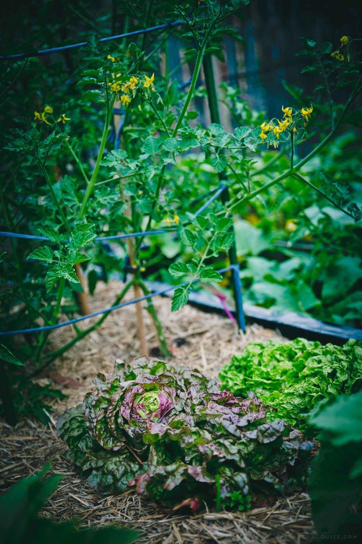 saschalouise.com-SpringHarvest