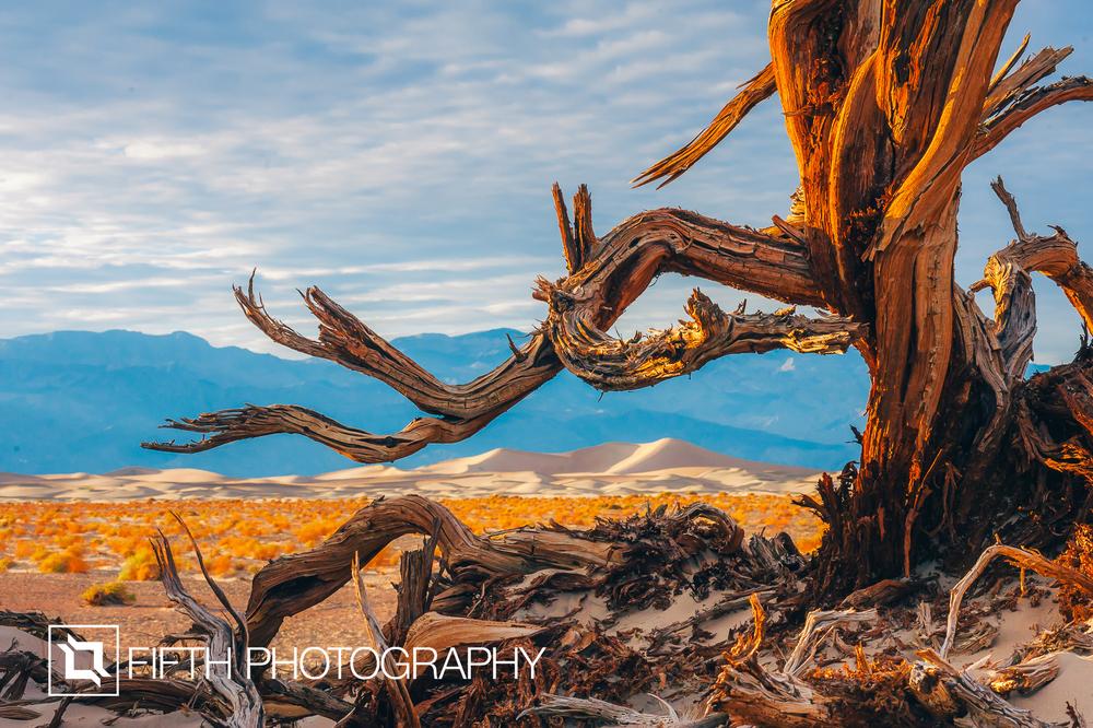 Tree of the Desert.jpg