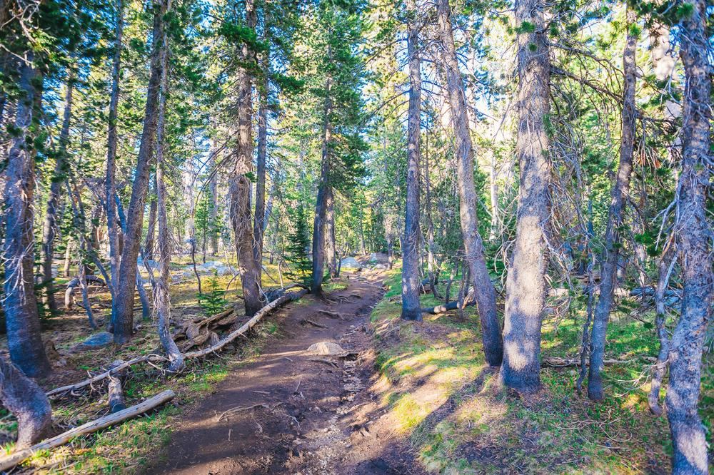 Tioga Pass and Cathedral Lake, Yosemite California