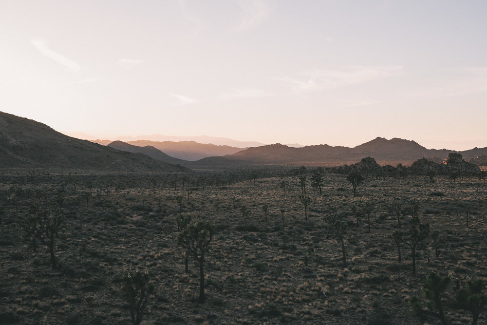 Best elopement spots in california joshua tree at sunset