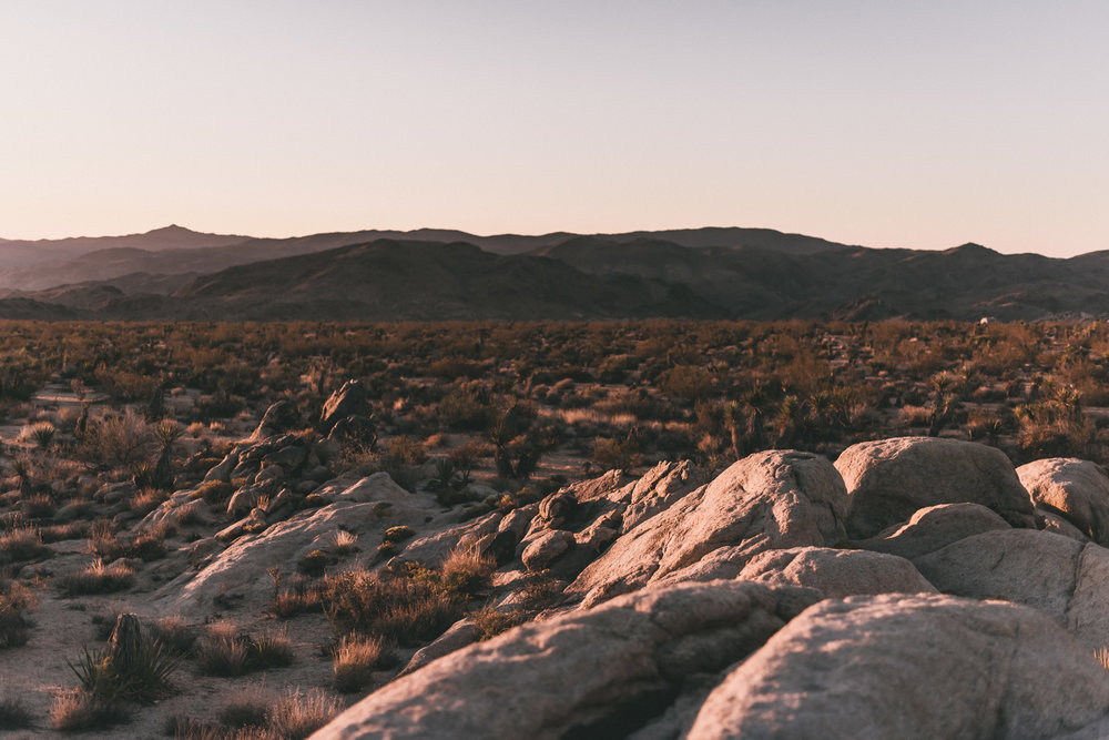 Sunset on Joshua Tree