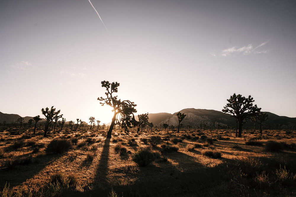 Sunrise in Joshua Tree National Park is perfect for intimate elopements. If eloping here make sure to avoid the heat of mid day in summer.
