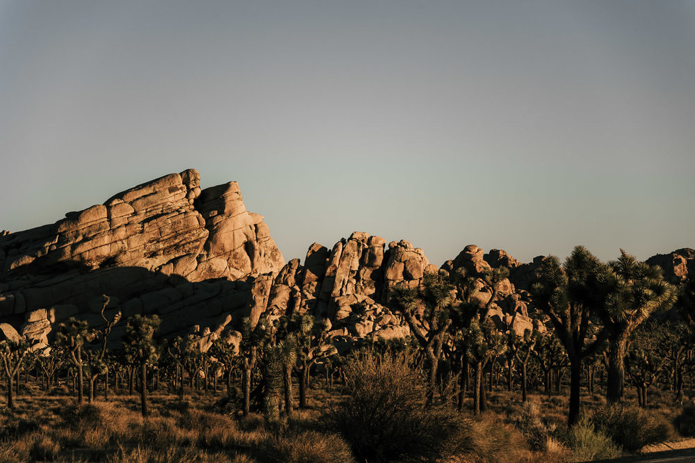Sunset in Joshua tree national park is the perfect time for a romantic portrait session or an intimate elopement ceremony.