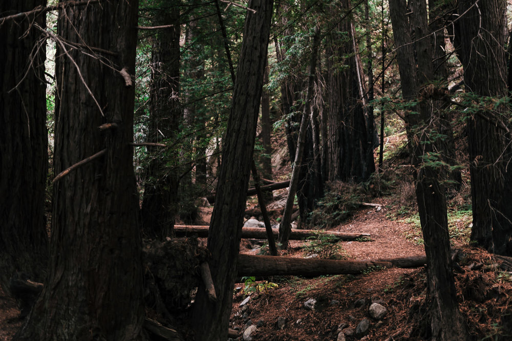The redwood forests of big sur are ideal for adventurous elopements in california.