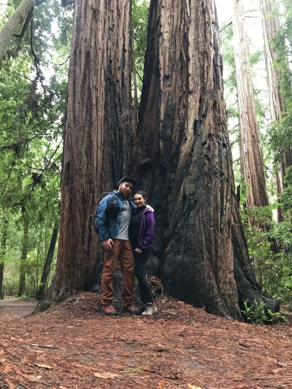 Hiking among the Redwoods
