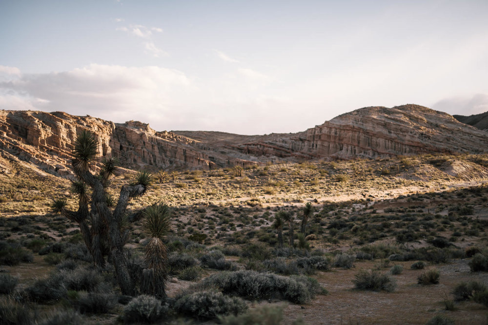 a Joshua tree in Red Rock Canyon state park makes a lovely backdrop for an intimate elopement.