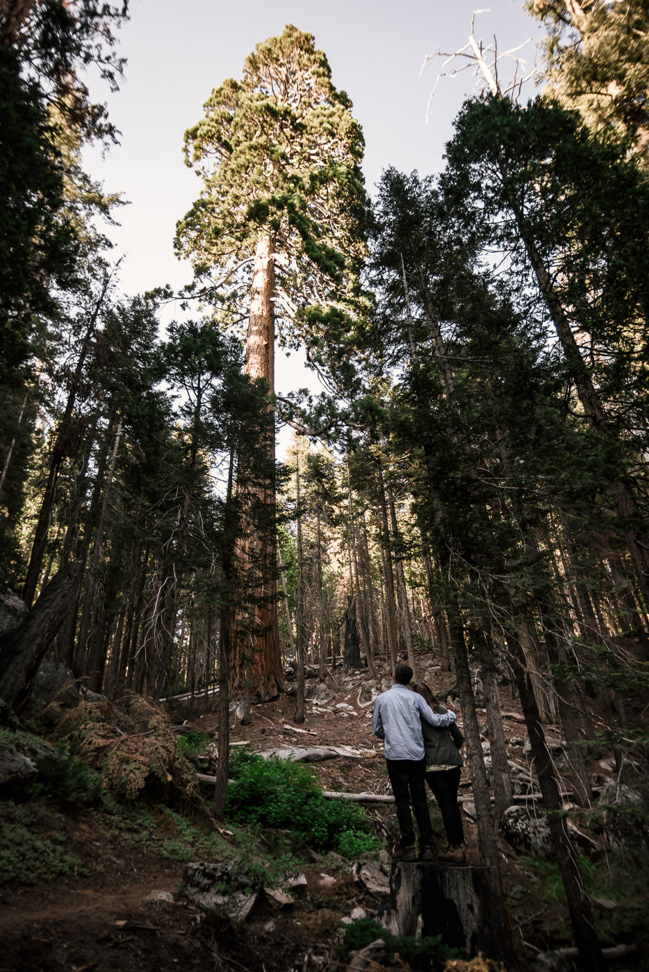 Couple stands in awe of a towering giant of a tree in Sequoia National Park.