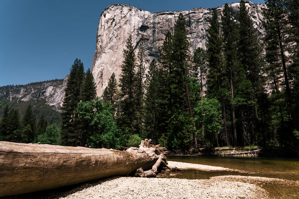 Fallen tree rests in the sand with El Capitan standing tall in the background at Cathederal Beach in Yosemite National Park.