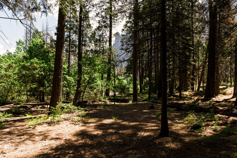 Shady woods line the river at Cathederal Beach making the perfect spot for intimate wedding ceremonies in Yosemite National Park.