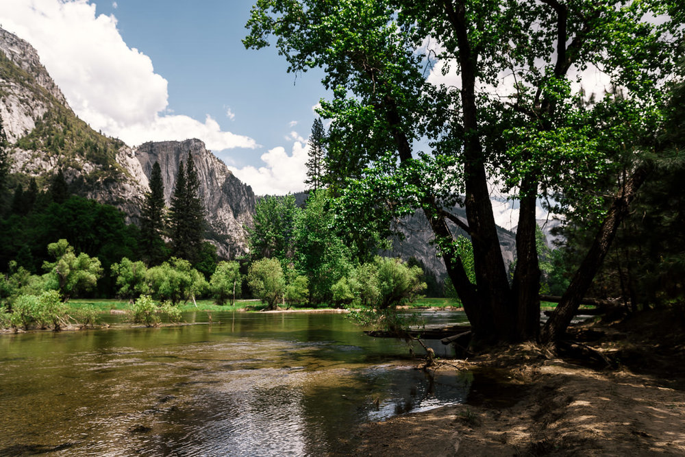 Large trees provide shade along the Merced river at Sentinel Beach in Yosemite National Park.