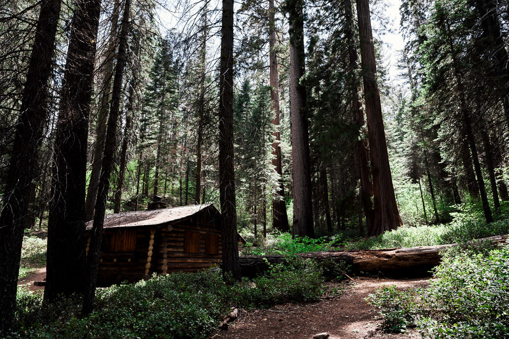Historic Cabin nestled among the Giant Sequoia of the Merced Grove in Yosemite National Park.