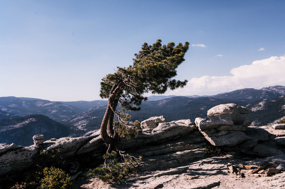 Bent by the wind, this lonely Jeffery pine sits atop the beautiful Sentinel Dome in Yosemite National Park.