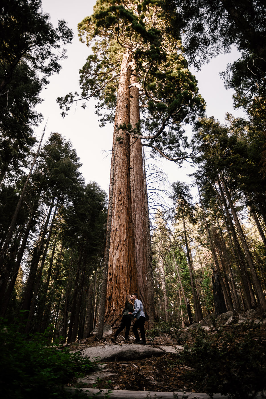 Sequoia ELOPEMENTS $1,890 - What could be better than eloping with your loved one to the towering forests and quiet meadows of Sequoia National Park? Sequoia is an ideal elopement destination for those who have always dreamed of tying the knot in quiet forest. From sunrise till sunset, we can explore the park taking in sights, and creating beautiful portraits you and your love will treasure for a lifetime. Let's have an adventure!ELOPEMENT COVERAGEAll day coverageAll photos on a USB drivePrint releasePersonalized slideshow digital filePrivate web gallery