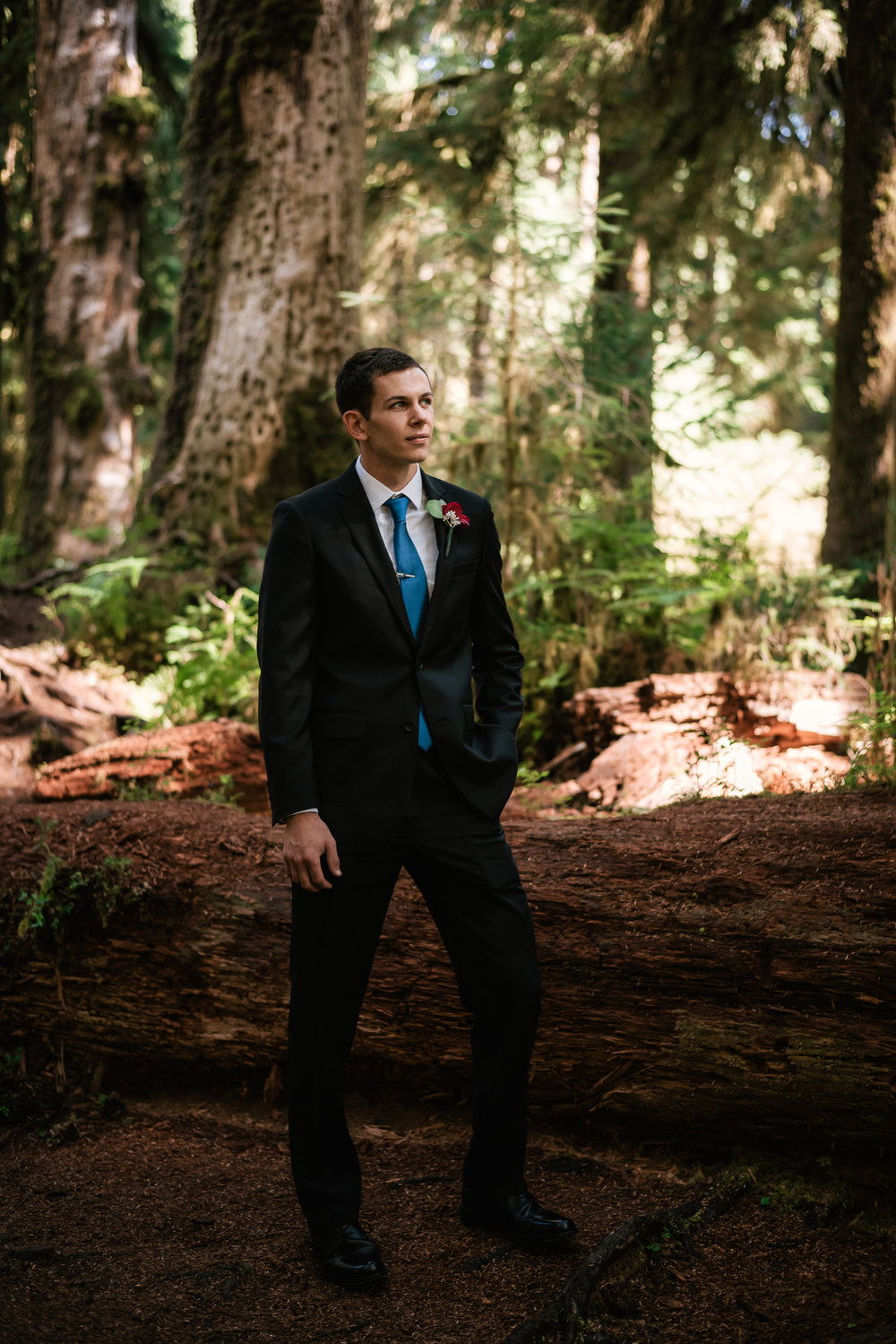 Groom stands before a fallen cedar tree in Olympic National Park while waiting for his bride to arrive.