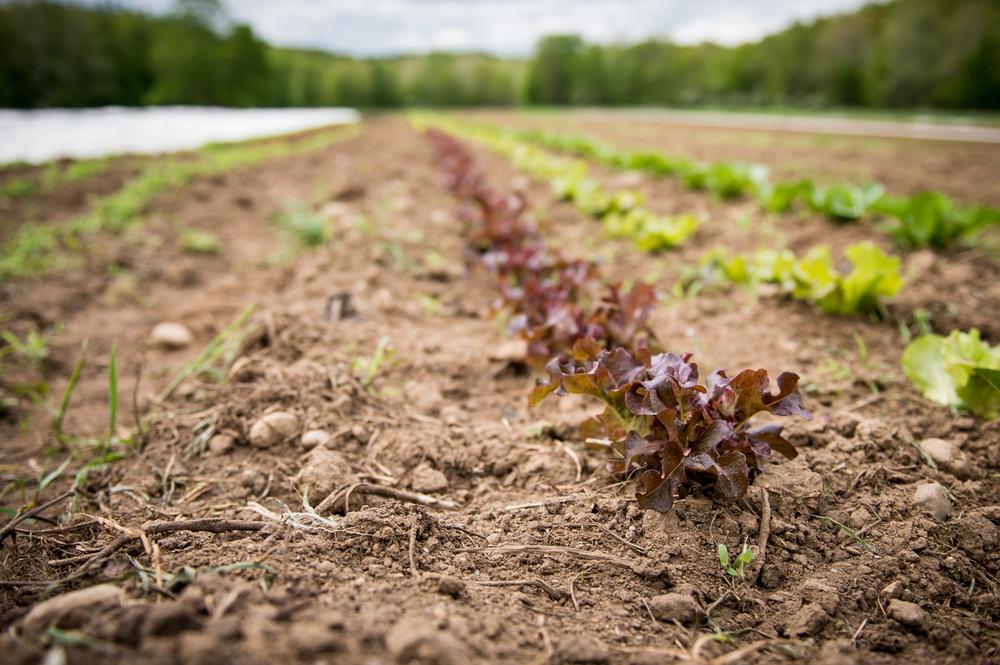 Farm-2.jpg