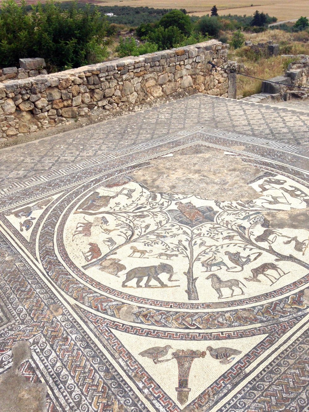 A well-preserved mosaic of Orpheus (center figure) and animals.