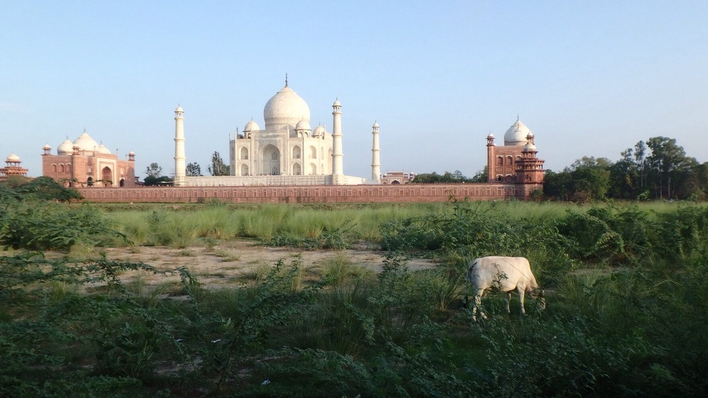 The Taj as seen from behind and across the river, near sunset.