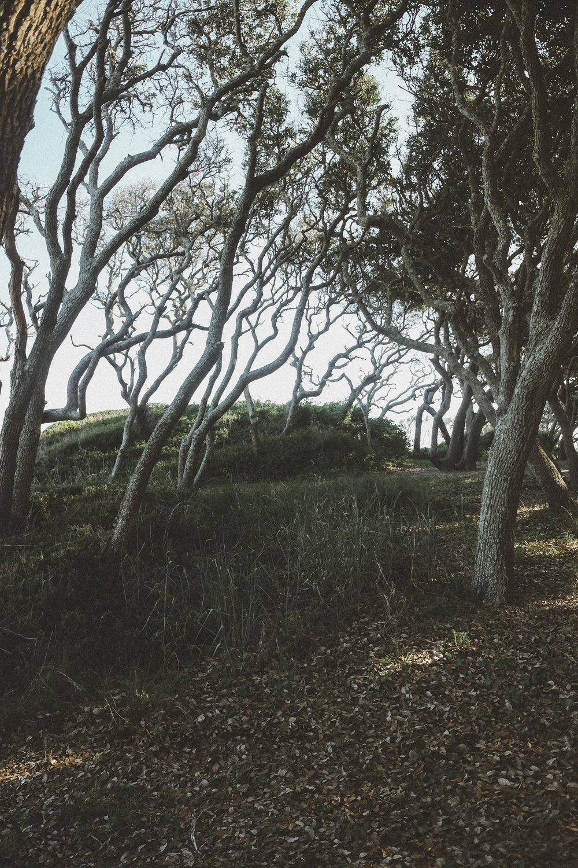 fort-fisher-trees-2.jpg