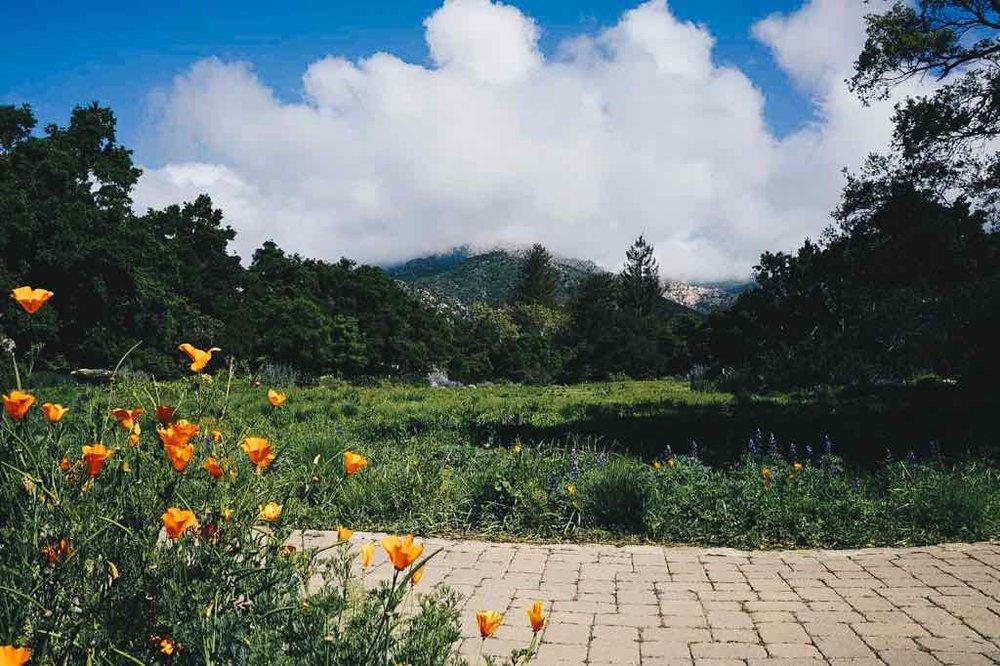 santa-barbara-botanical-garden-1.jpg