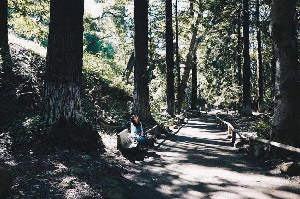 santa-barbara-redwood-trees.jpg